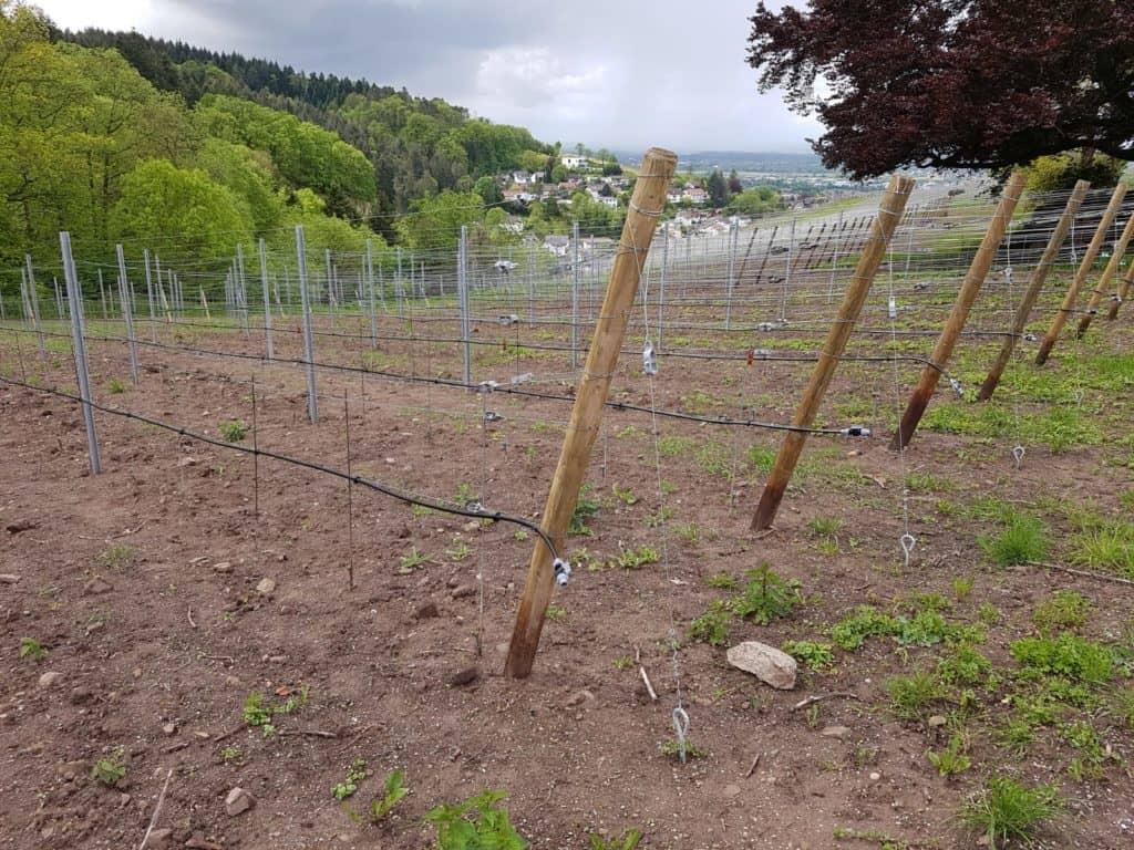 Ein neuer Weinberg entsteht